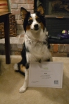 First Class Canines Class Grad, Lucy