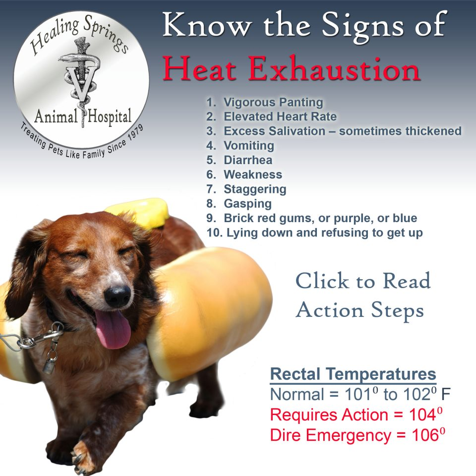 Can Dogs Get Heat Exhaustion