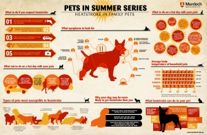 Pets In Summer - Safety